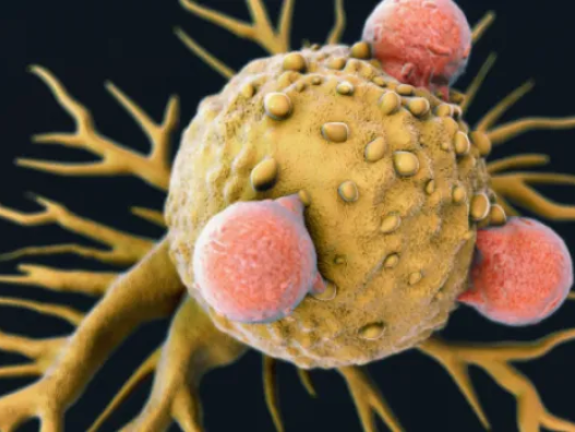 Immune cell that destroys most types of cancer discovered, and scientists are hopeful it could be used to develop a 'one-size-fits-all' cancer treatment