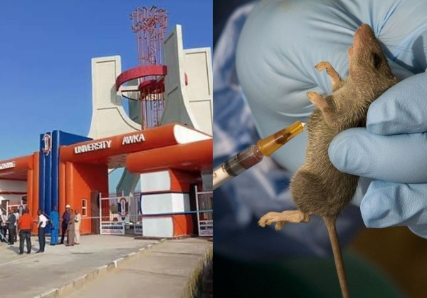 UNIZIK student confirmed as first Lassa Fever patient in Anambra State