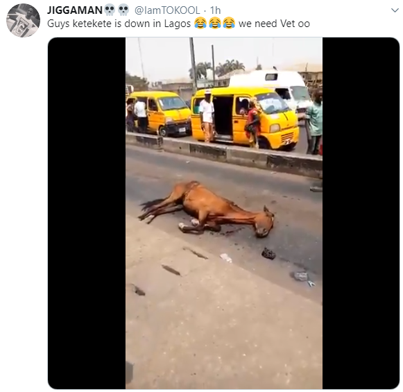 Tired horse collapses after doing the job of a keke napep for one day (video)
