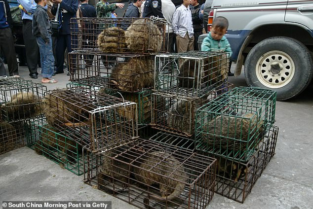 Coronavirus: China bans eating and trading of all wild animals
