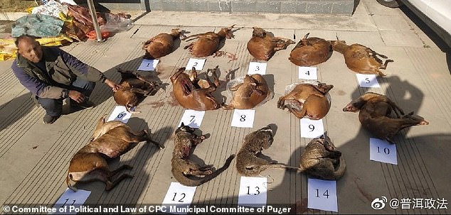 Coronavirus: China bans eating and trading of all wild animals