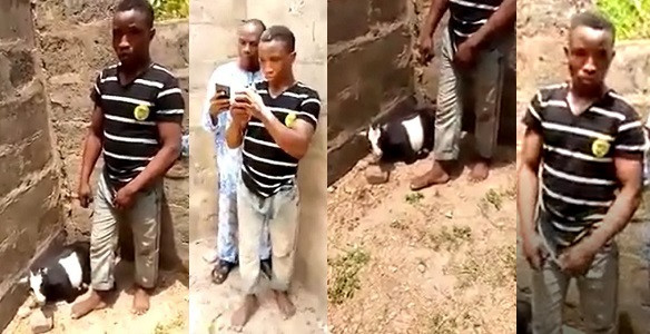 Man caught red-handed having sex with a goat in Ekiti (video)