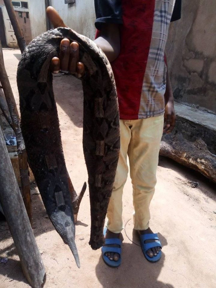 Man bitten by snake dies after being taken to herbalist in Umuahia (photos)