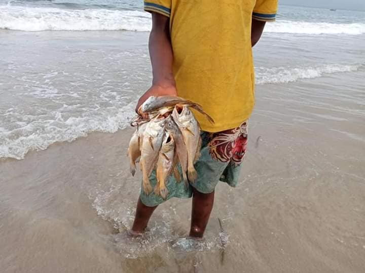 Rivers State Government cautions fishing communities over massive death of fishes