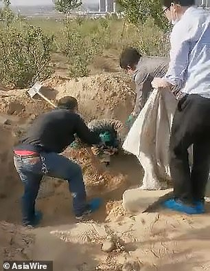 79-year-old paralyzed mother pulled from grave alive, three days after son buried her (video)
