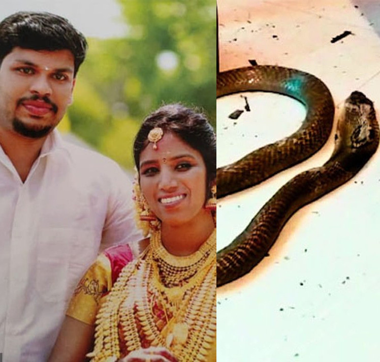 Man murders wife by throwing a cobra at her after she was discharged from hospital following his initial attempt to kill her by releasing a viper into her bedroom