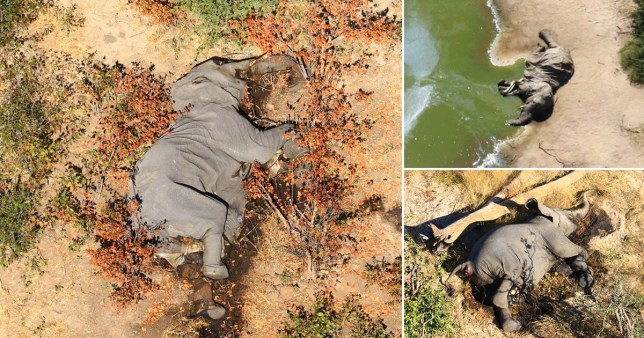 350 Elephants die mysteriously in Botswana