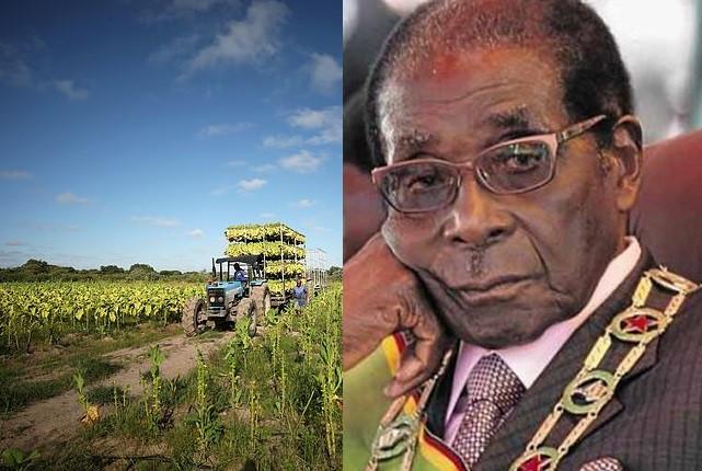 Zimbabwe offers ?2.7 billion compensation to 4,500 white farmers whose land was seized by Robert Mugabe?