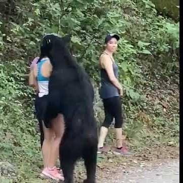 Wild bear seen sniffing a woman