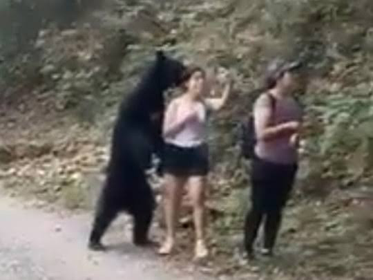 Wild bear seen sniffing a woman