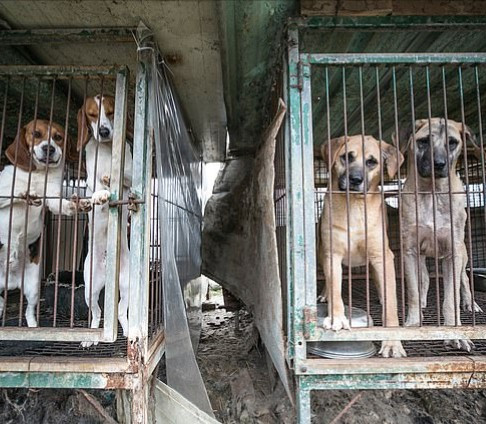 North Koreans are ordered to hand over their pet dogs to be used as meat as the country is rocked by food shortages