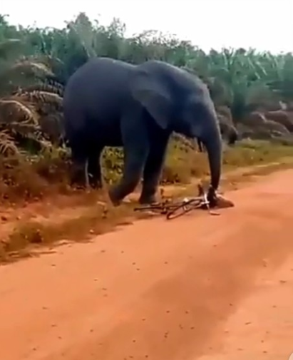 Elephant attacks bicycle rider and seizes his bicycle (video)
