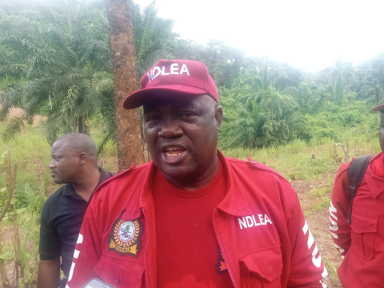 Suspects arrested as NDLEA destroys cannabis plantation worth over N1.5bn in Kogi