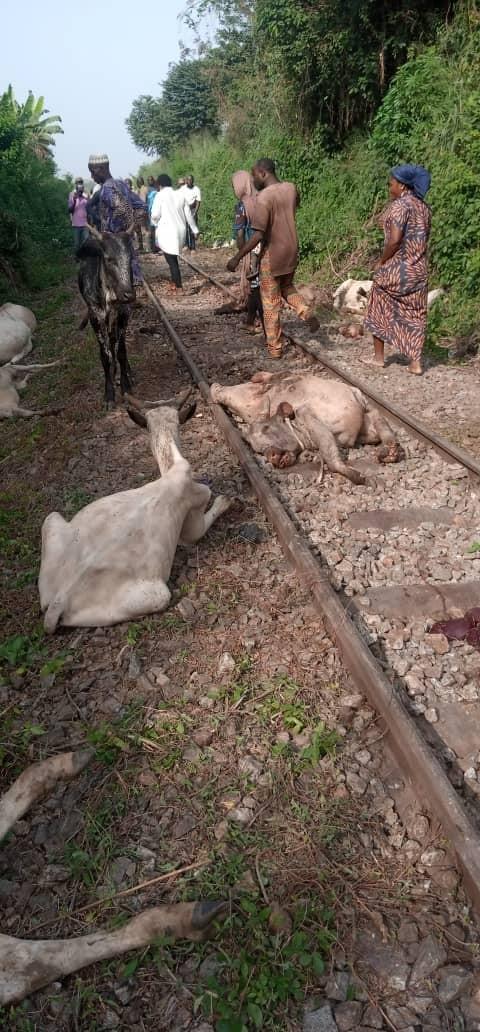 Kwara-bound train kills 47 cows worth over N10m in Osun