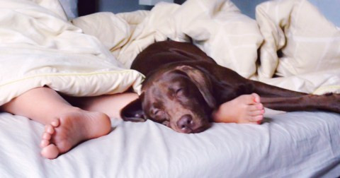 Sleeping with a dog in bed is better than sharing the bed with your partner- New study claims