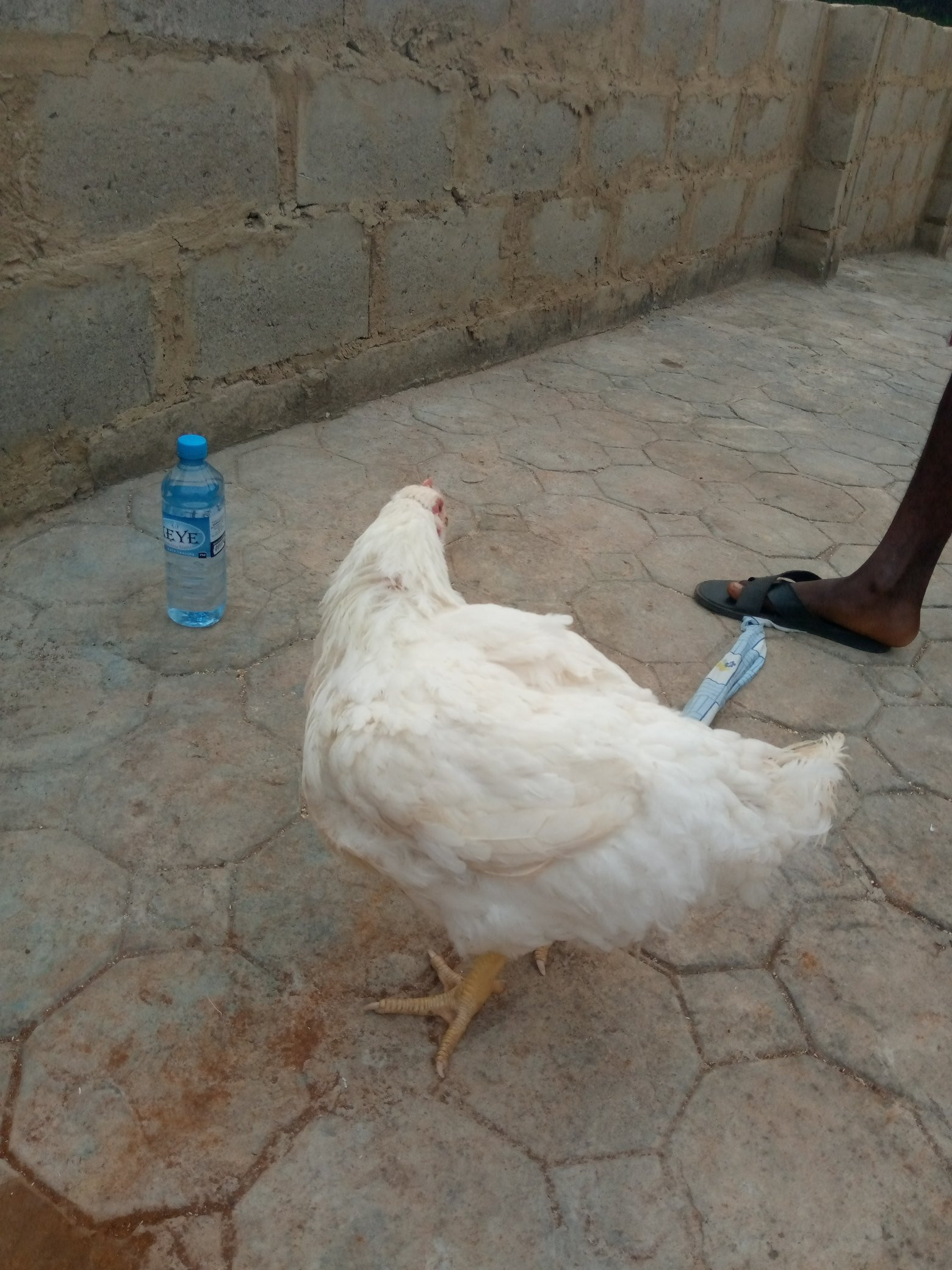 Nigerian woman praises her husband for buying Christmas chicken