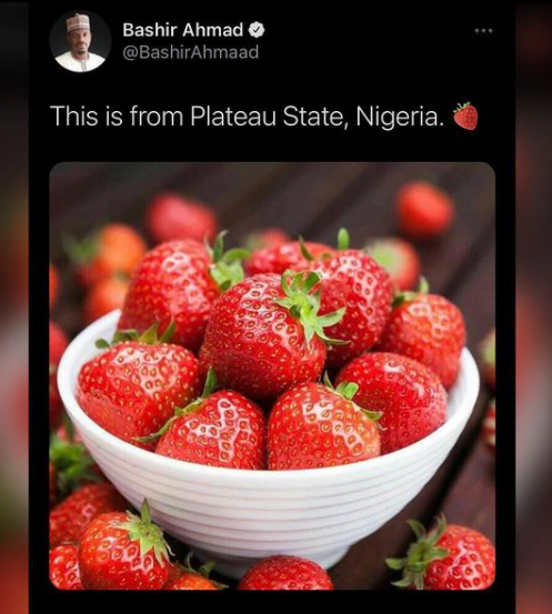 "President aide Bashir Ahmad reacts after being called out for ""wrongly passing off"" photo of strawberries as those from Plateau state"