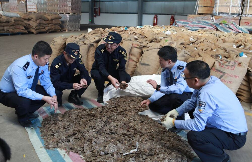 China jails 17 people for smuggling Pangolin scales worth $28 million from Nigeria