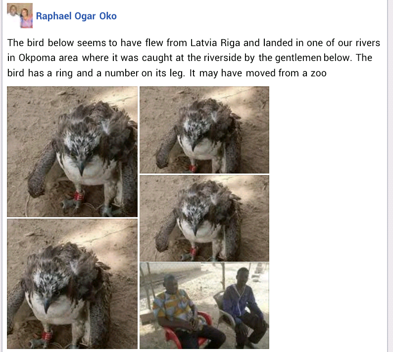 Bird suspected to belong to a zoo in Europe caught in Cross River state