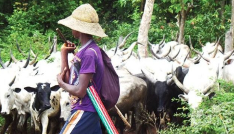 Stay put where you are and continue to be law-abiding.- Northern Elders Forum tell herdsmen residing in Ondo