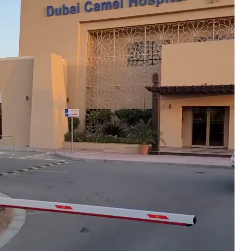 Dino Melaye expresses surprise at seeing a hospital for camels in Dubai (video)