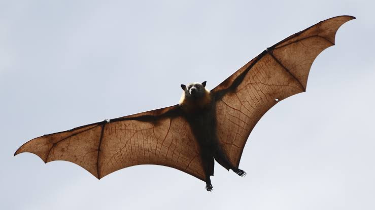 Exposed: Chinese lab investigated by WHO over origin of covid-19, designed secret cages to breed bats for coronavirus experiments