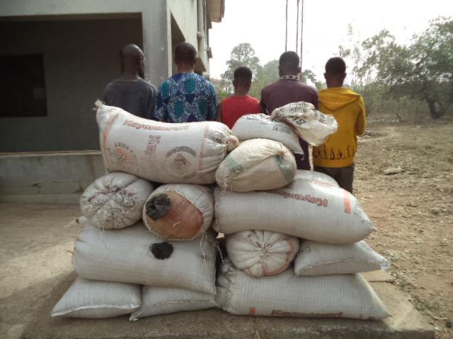9 suspects arrested as NDLEA seizes 1,292 kilograms of illicit drug in Ondo forest  (photos)