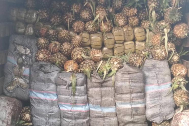 Wanted drug baron nabbed in Nasarawa as NDLEA intercepts 1,330kg skunk in Edo