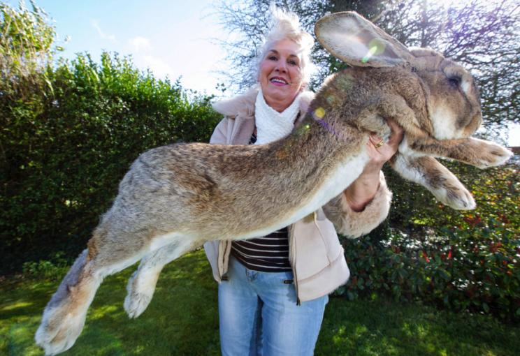 ?World?s biggest rabbit? stolen from owner?s home