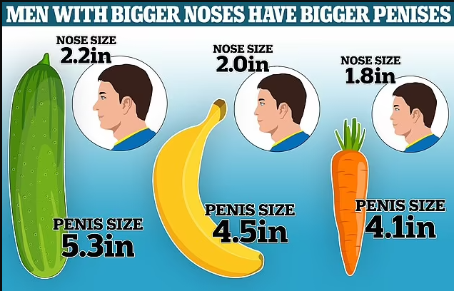 Men with bigger noses have bigger penises, scientists say after measuring?male reproductive organs of 126 male corpses