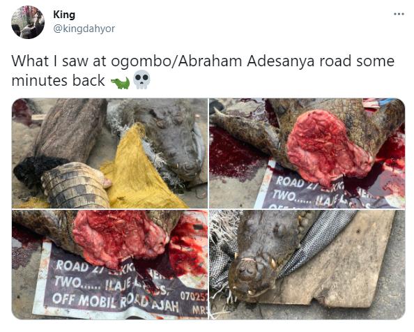 Crocodile killed in Lagos (photos)