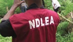 Gunmen set NDLEA office ablaze in Abia
