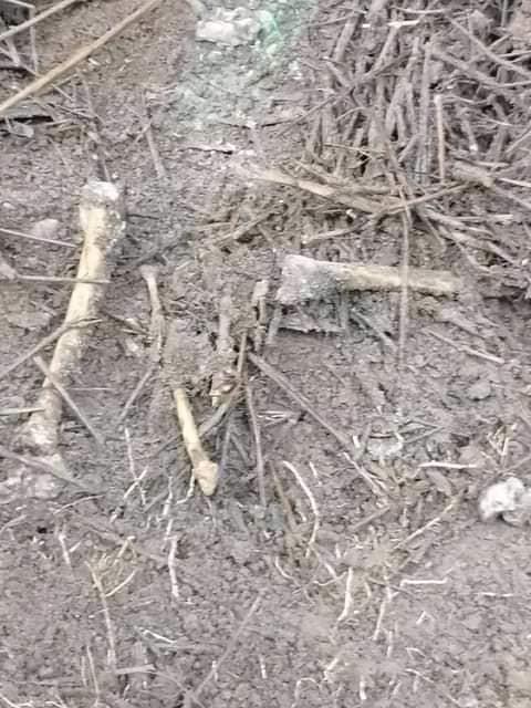 ?? exhumes decomposing bodies