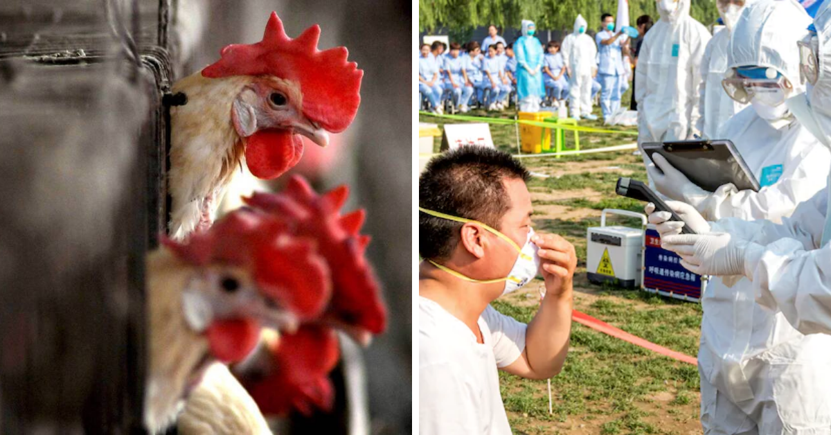 China records world?s first case of human infection with H10N3 bird flu