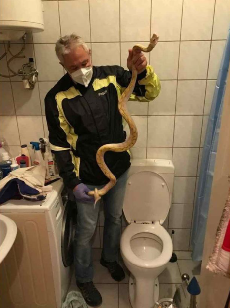 Man finds 6ft snake curled up inside his toilet after it started