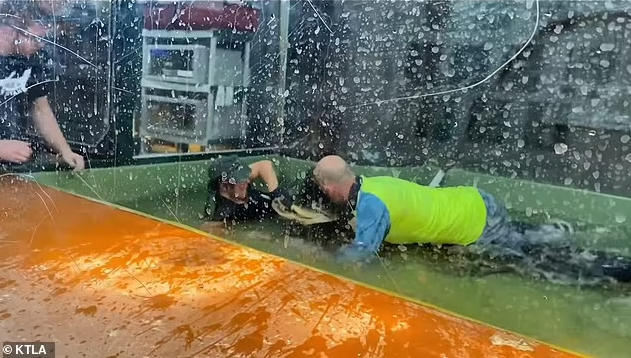 Zoo handler survives alligator attack as visitor jumps into tank to save her when an alligator clamped down on her arm (video)