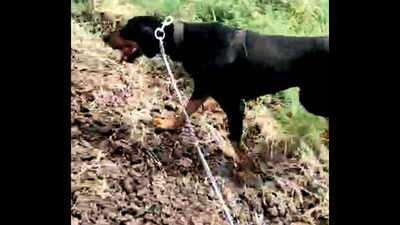 Police dog sniffs out suspects who allegedly gangraped and murdered woman in India (video)
