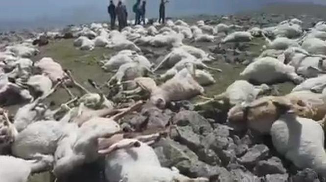 550 sheep killed by single lightning strike on mountain