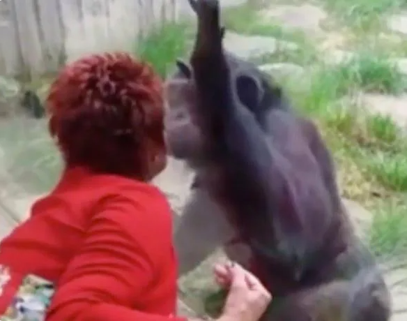Woman banned from zoo after 4-year