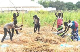 Farmers in Katsina state lament as bandits prevent them from farming
