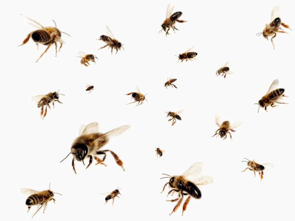 Man allegedly stung by bees while having s3x with a married woman