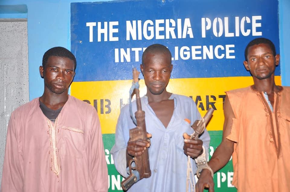 Police arrest three cattle rustlers in Adamawa, recover guns, cows